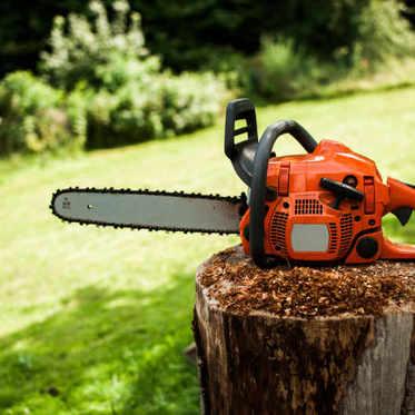 Quel professionnel pour l'abattage d'arbre ?