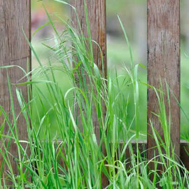 Comment désherber un jardin en friche ?