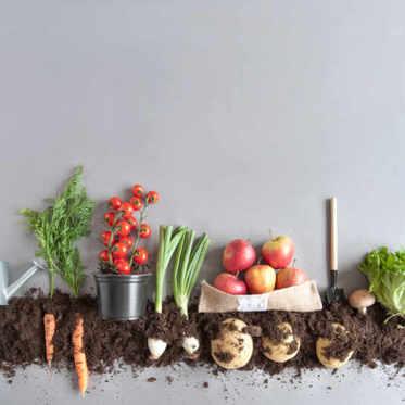 Quand planter les légumes dans une jardinière ?