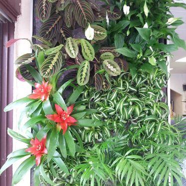 Les Murs Végétaux