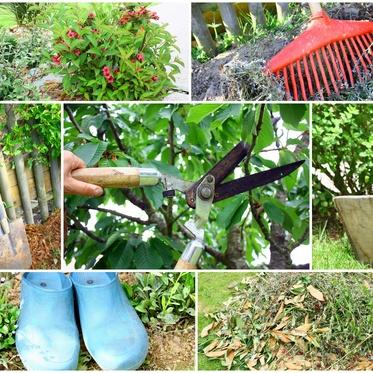 les outils du débutant pour l'entretien de jardin
