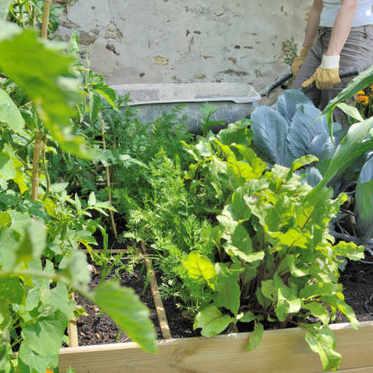 légumes jardinière
